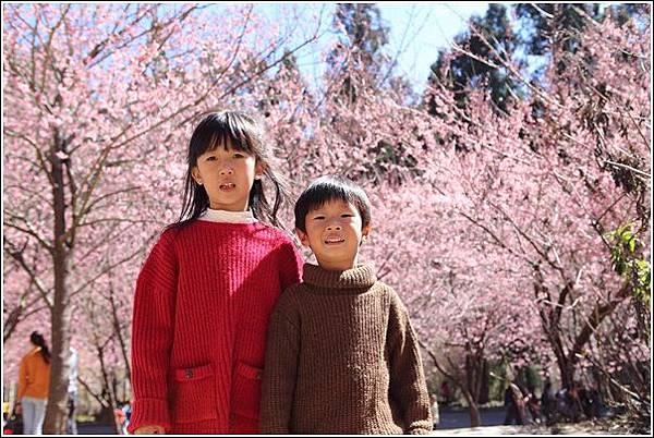 武陵農場櫻花季 (24)