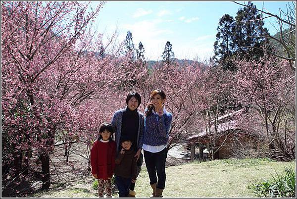 武陵農場櫻花季 (26)
