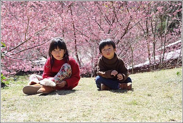 武陵農場櫻花季 (27)