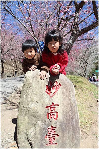 武陵農場櫻花季 (29)