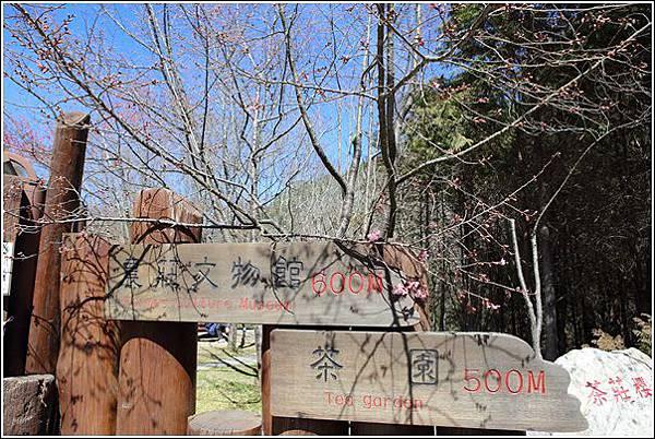 武陵農場櫻花季 (32)