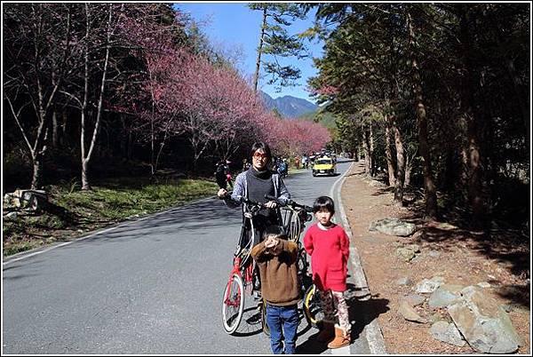 武陵農場櫻花季 (40)