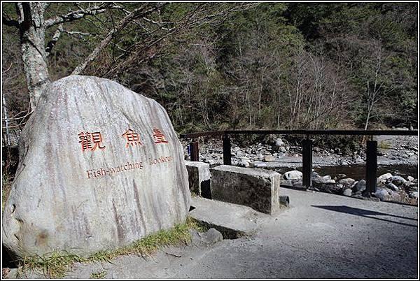 武陵農場櫻花季 (41)