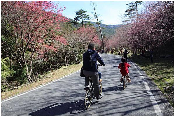 武陵農場櫻花季 (44)