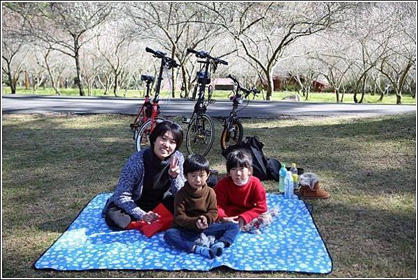 武陵農場櫻花季 (46)