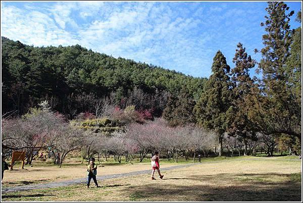 武陵農場櫻花季 (47)