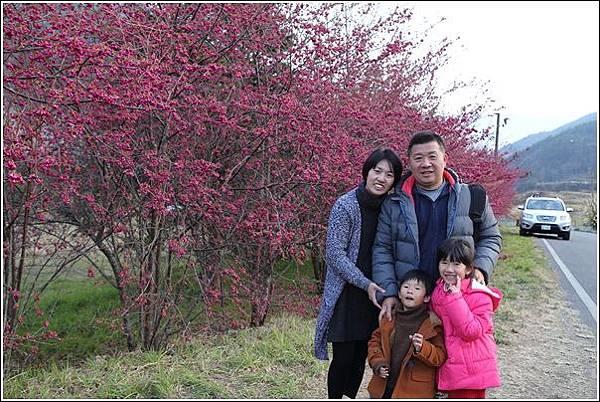 武陵農場櫻花季 (63)