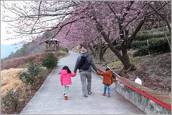 武陵農場櫻花季 (71)