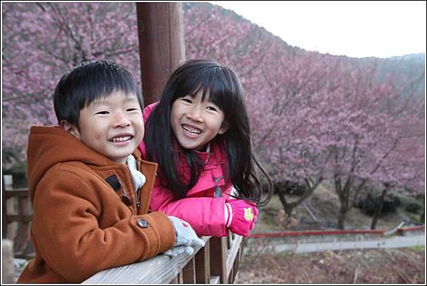武陵農場櫻花季 (74)