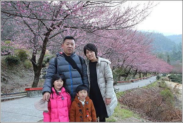 武陵農場櫻花季 (75)