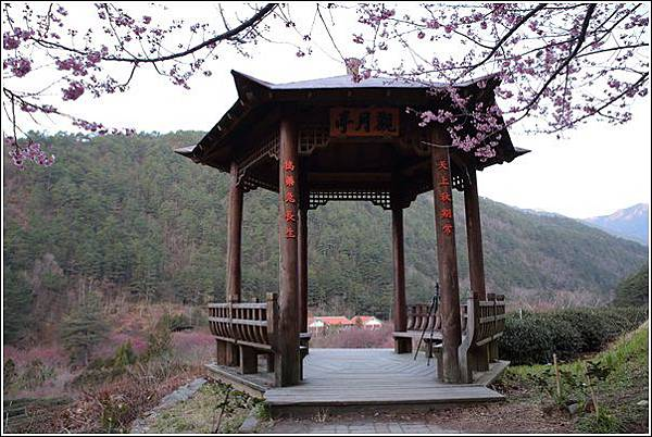 武陵農場櫻花季 (76)
