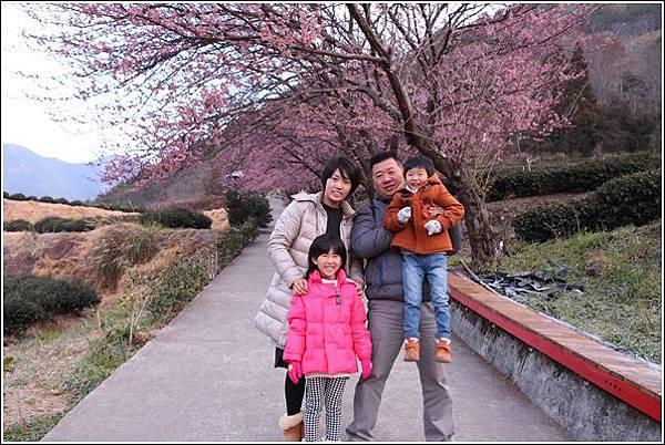 武陵農場櫻花季 (77)