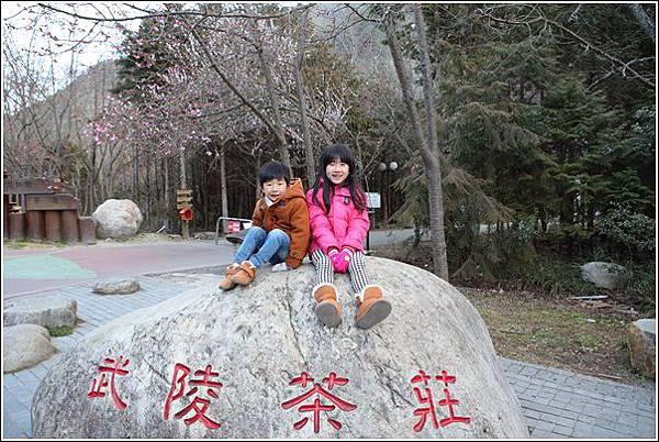 武陵農場櫻花季 (86)