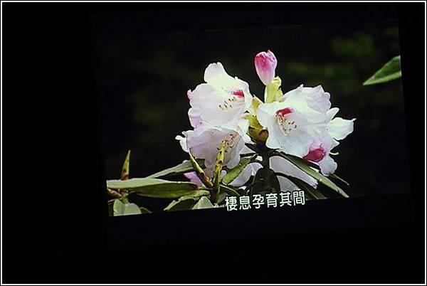 太平山國家森林遊樂區 (26)