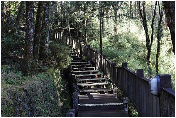 太平山國家森林遊樂區 (88)