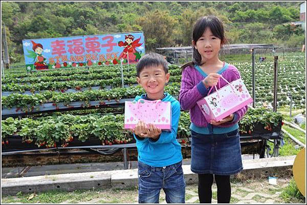 大湖採草莓 (2)