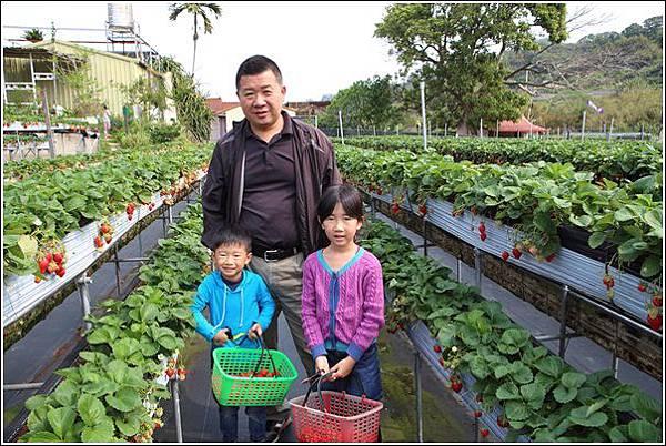 大湖採草莓 (10)