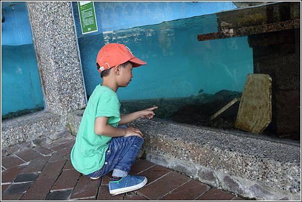 鯉魚潭風景區 (11)