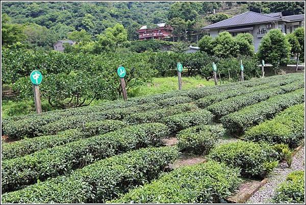 內山茶驛站 (3)