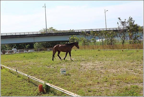 小牛仔休閒農場 (21)