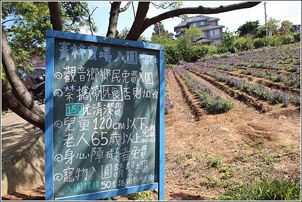 青林農場 (4)