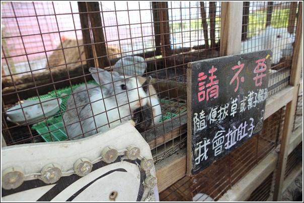 青林農場 (12)
