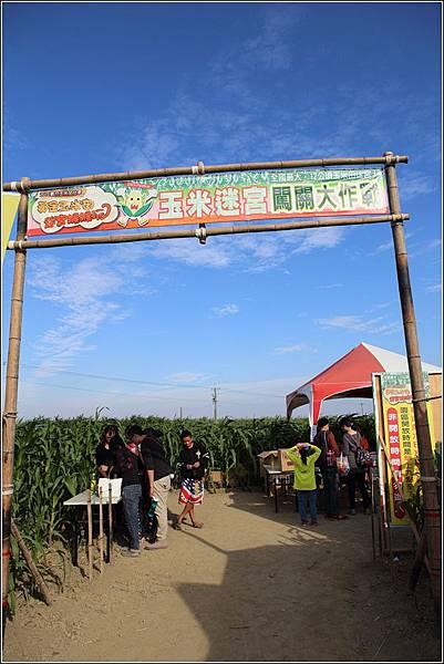 義竹玉米迷宮 (11)