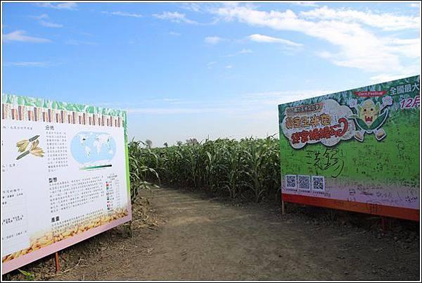 義竹玉米迷宮 (14)