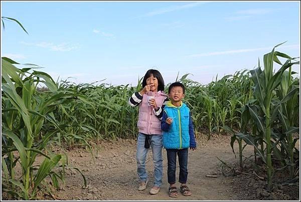 義竹玉米迷宮 (16)