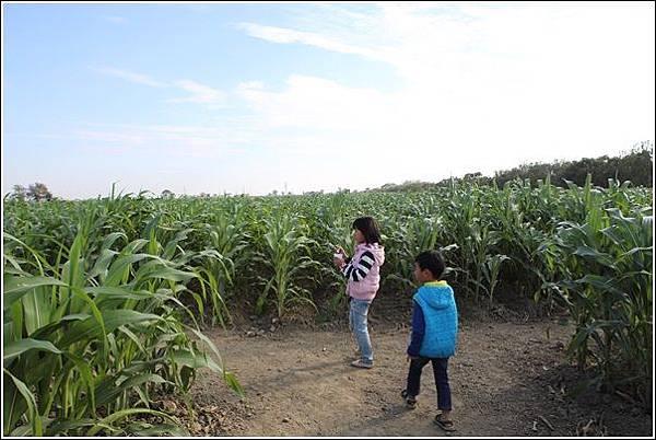 義竹玉米迷宮 (17)