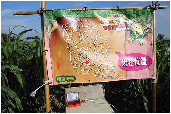 義竹玉米迷宮 (24)