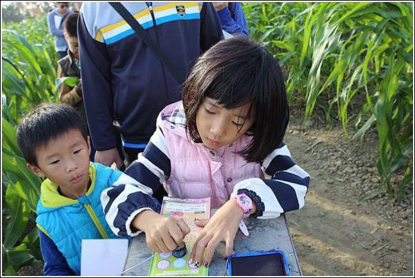 義竹玉米迷宮 (28)
