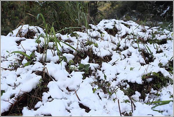 尖石賞雪 (4)