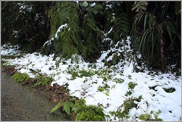 尖石賞雪 (5)