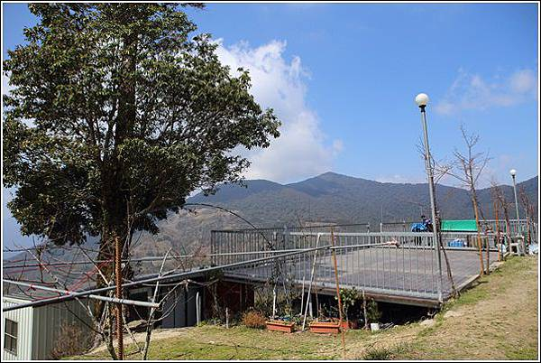 長榮果園夫妻樹露營區 (52)
