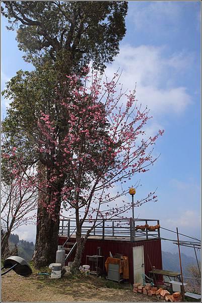 長榮果園夫妻樹露營區(61)