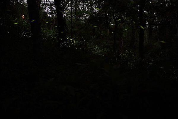 東勢林場 (70)