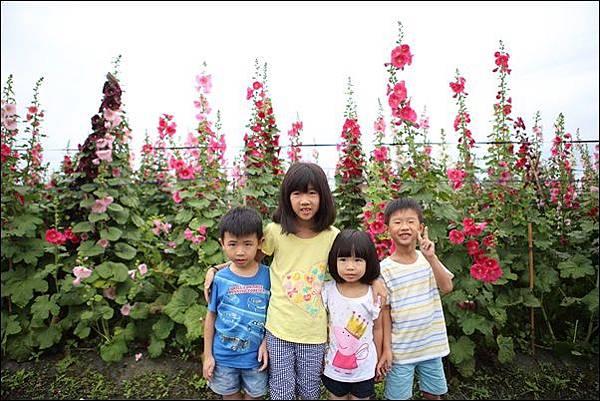 蜀葵花 (5)