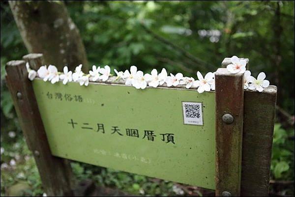 藤山步道 (4)