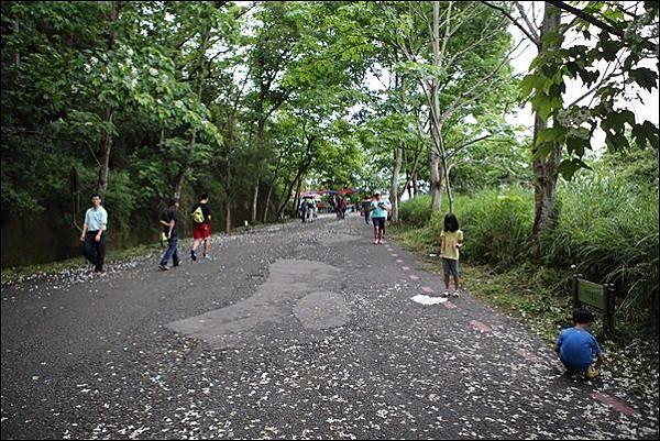 藤山步道 (8)
