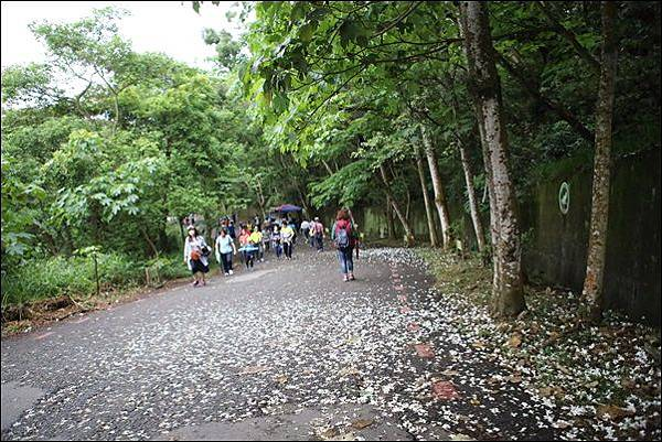 藤山步道 (15)