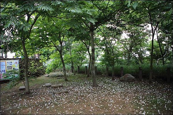 藤山步道 (16)