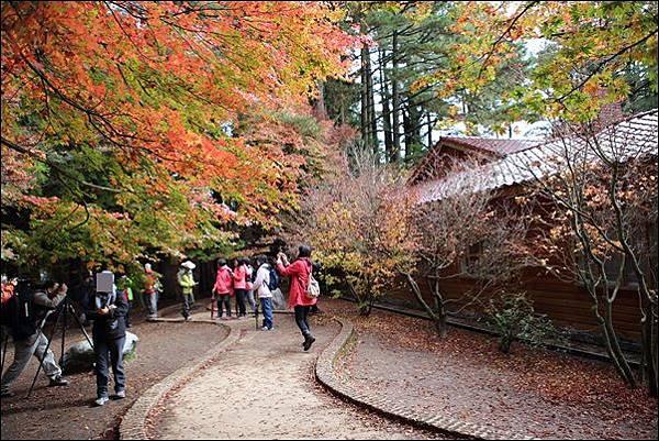 福壽山農場 (3)