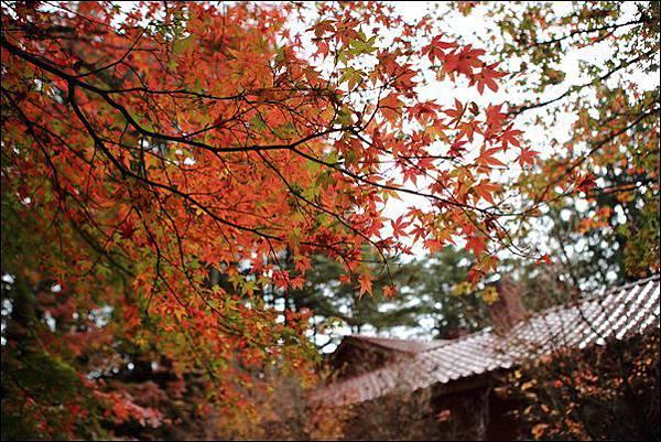 福壽山農場 (9)