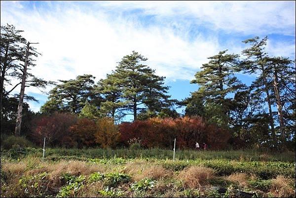 福壽山農場 (68)