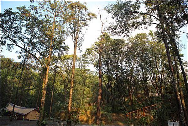 十分自然露營區 (51)