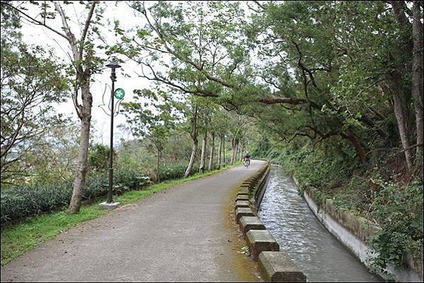 水流東桐花步道 (3)