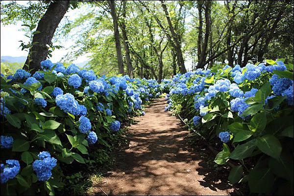 八木崎公園 (3)