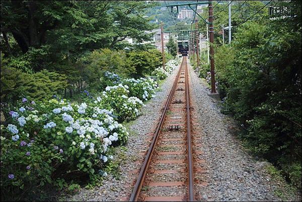 箱根登山纜車 (4-1).jpg