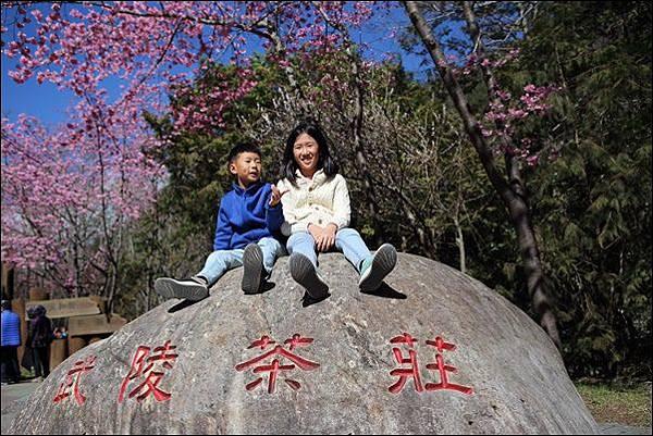 武陵農場櫻花季 (34).jpg